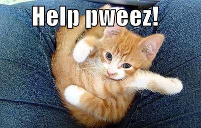folded-up-kitten.jpg
