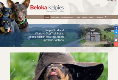 Beloka Kelpies